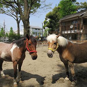 渋谷区ポニー公園 東京乗馬倶楽部